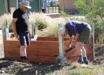 Don hamilton garden box day