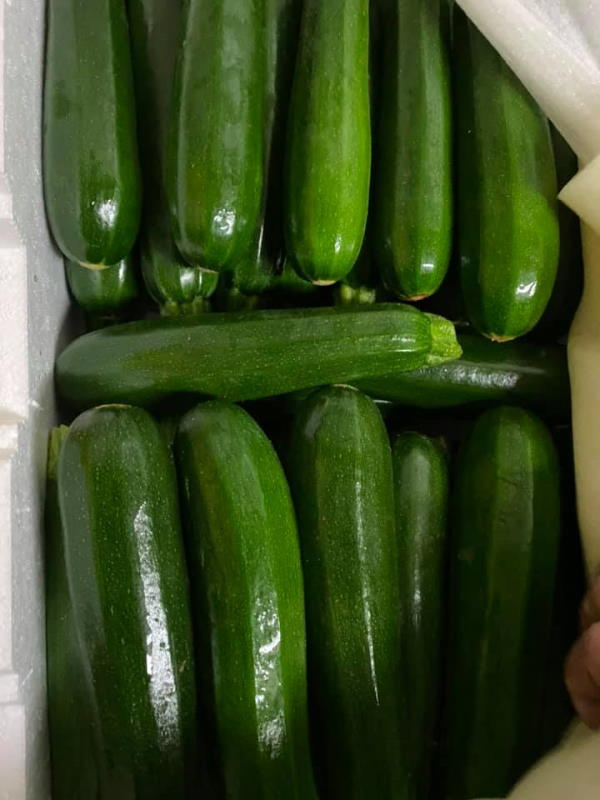 zucchines - Rieschiecks orchards18.pg